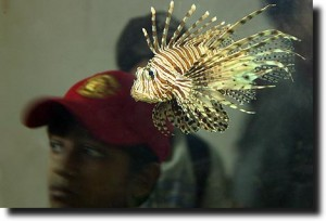 Lionfish with kids in the background