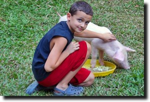 Breck and the Pig