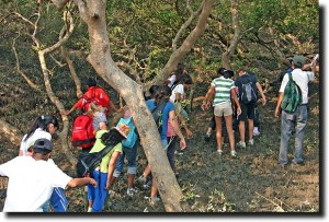 ASB in the mangroves