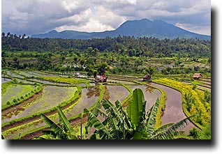 View over the Balinese rice paddies to a volcano in the distance