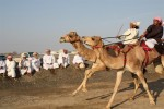 Camel racing - hang on!!