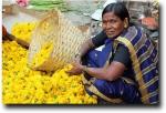 Lady seller
