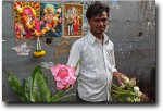 Selling lotus flowers