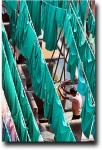Drying shirts in the middle of green curtains for mosques