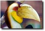 Gorgeous toucanesque thing