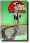Breck got the chance to hold a biiiiiiiiiig python