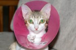 Linsea poses in her cone of shame