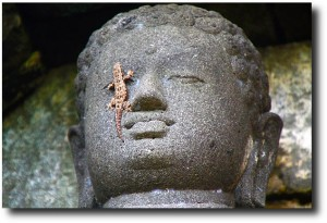 A Buddha statue with a new friend...