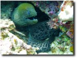 Moray eel - we saw bunches of eels, of all shapes and sizes!