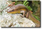 A skink visited us during lunch - luckily he escaped unscathed!