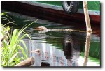 This monitor lizard tried to climb onto another boat to steal some food!