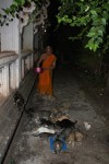 Monk feeding the cats in Pakse