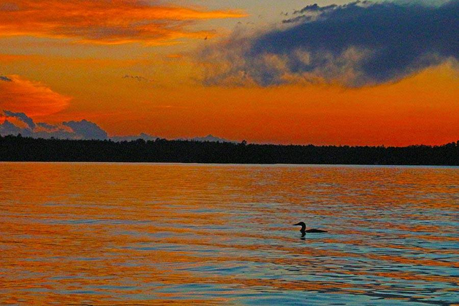 A lone loon bids farewell to the day. What a great way to spend the summer solstice!