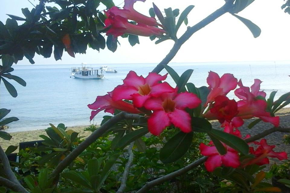 Bali flowers