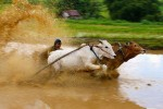 My students think this is a lot of fun because of the big wave of mud above the rider!