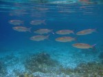 Schools of fish followed us while snorkelling and diving.