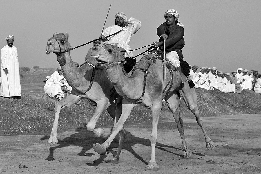 Omani camel races