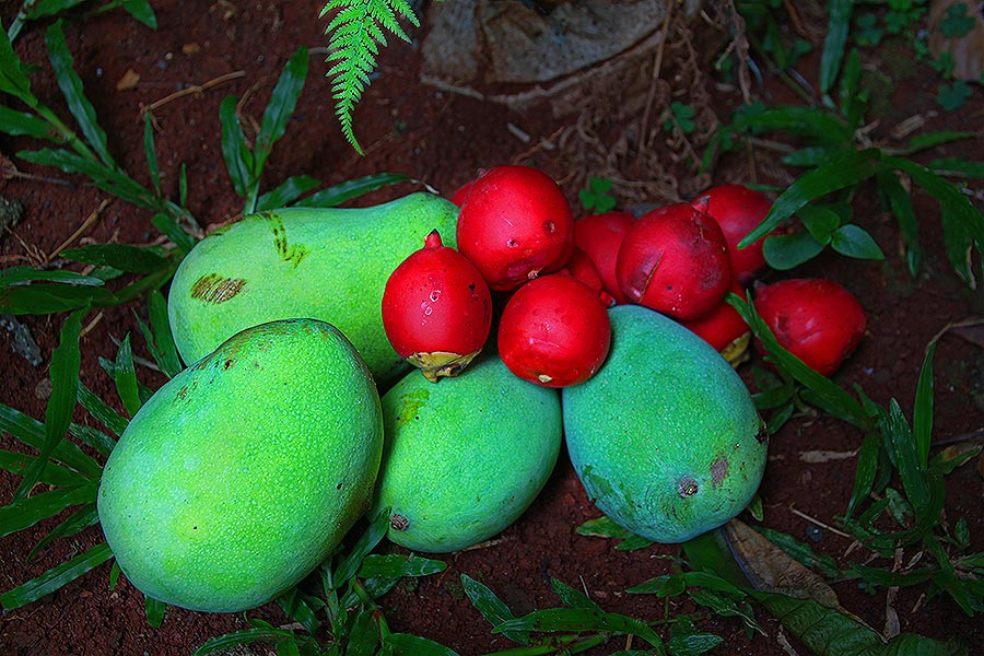 Mangos and red palm fruit - looks yummy!