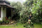 Alea strikes a pose amid devastation!