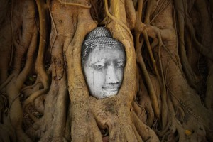 RUNNER-UP - Cultural: A Buddha head in Ayutthaya with the gnarled roots of a tree wrapped around it.