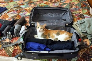 "Linsea decided to give me a little help packing (or was she saying, ""Don't go!"")"