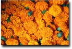 Marigolds were everywhere, as they are used for garlands at temples