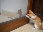 The kitties play with each other through the screen door