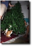 But as soon as the tree itself started taking shape they were all over it!