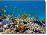 Fish over coral