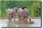 Here he is demonstrating the proper rice paddy plowing technique - I really like this picture!