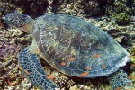 We saw turtles on almost every dive (and most snorkels as well)
