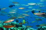 We saw teeming schools of fish, as well as other fantastic sights