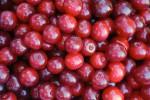 Cherries picked in Door County, WI