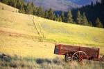 Field of gold outside Helena, Montana