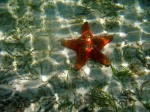 I just like the patterns in this starfish shot. This is (obviously) up near the surface.