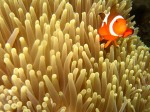 We always love the clown fish, and take more than our fair share of pictures of them!